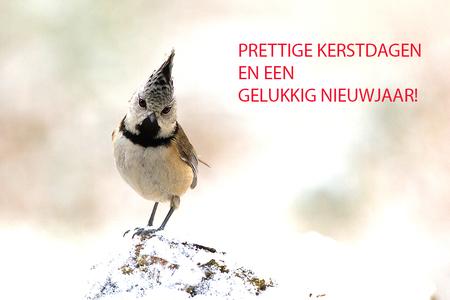 Fijne dagen! - Bij deze wil ik iedereen een hele fijne kerst wensen en alvast een gelukkig gezond en fotorijk 2017! - foto door tom kruissink op 23-12-2016 - deze foto bevat: natuur, sneeuw, kerst, nieuwjaar, winter, vogel, dier, mees, kuifmees, trekvogel, zangvogel