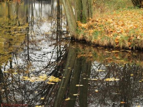 Herfst reflecteerd in het water