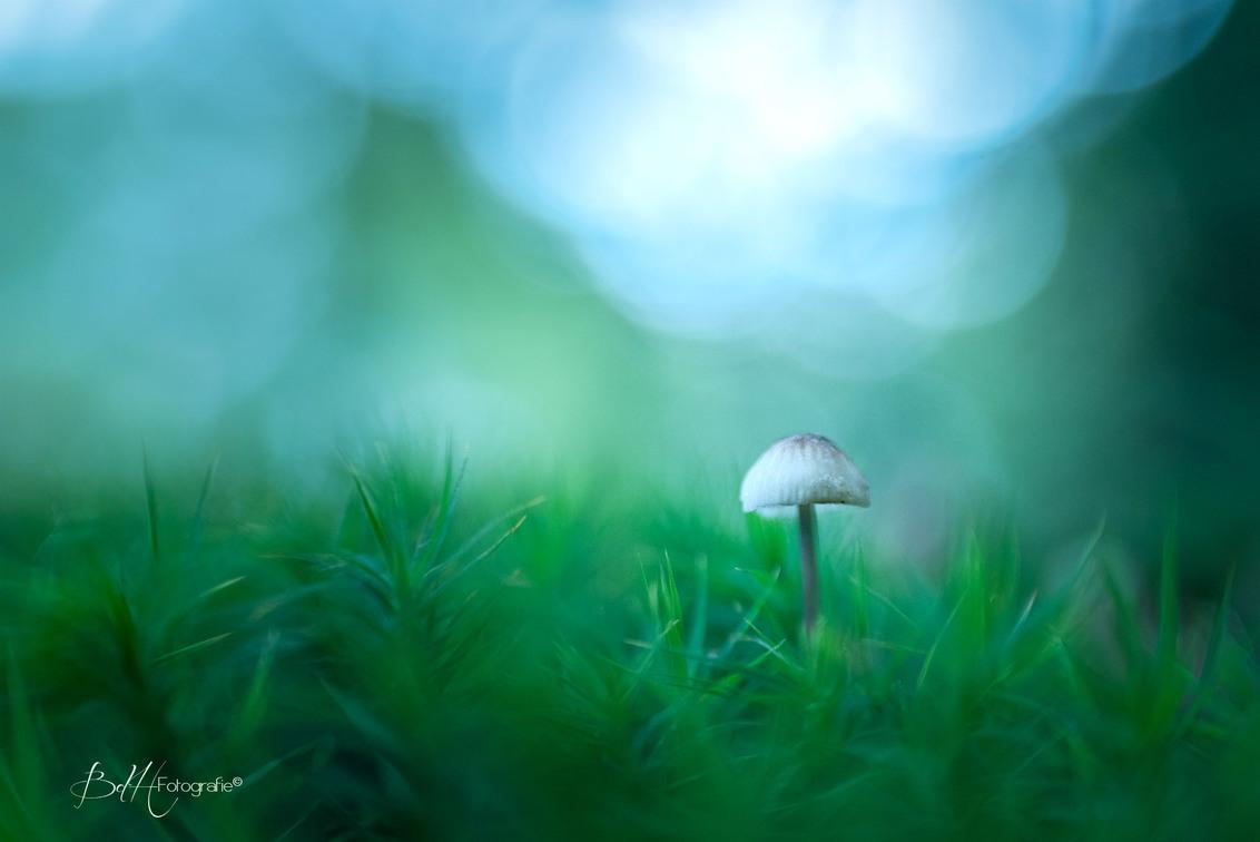 Little one - - - foto door BiancadH op 11-09-2018 - deze foto bevat: macro, blauw, natuur, licht, paddestoel, herfst, mos, lensbaby, dof, bokeh
