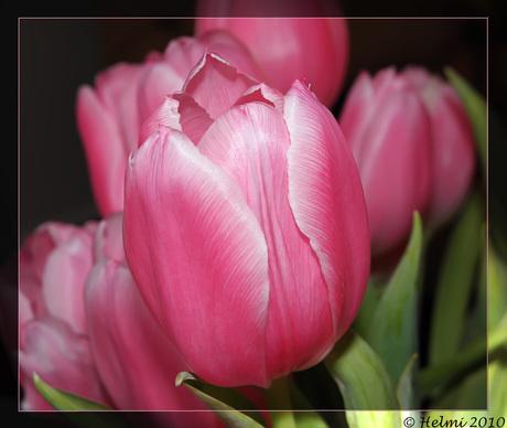 Blijven hopen....op voorjaar!