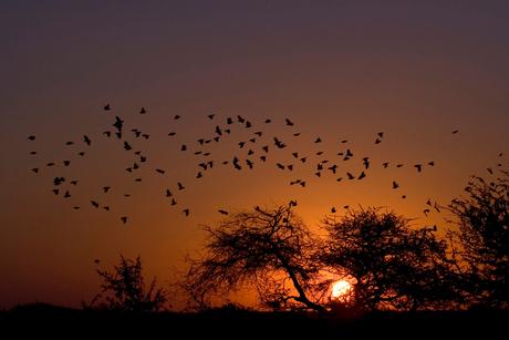 Zonsondergang in Namibie