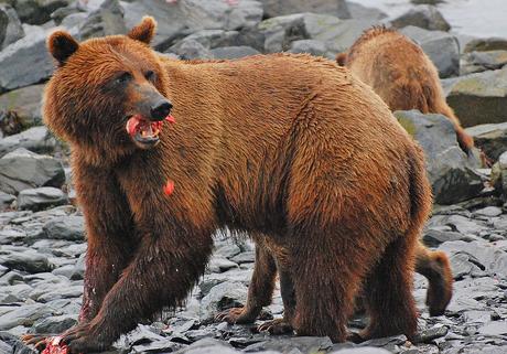 Bear viewing!