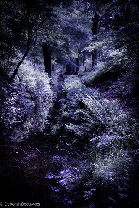 Fantasy Forest II