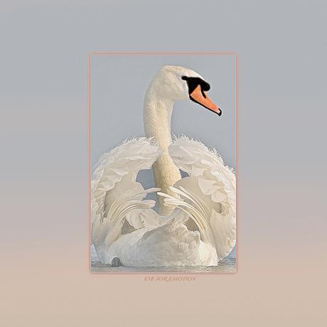Swanart