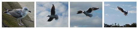 In vogelvlucht ...