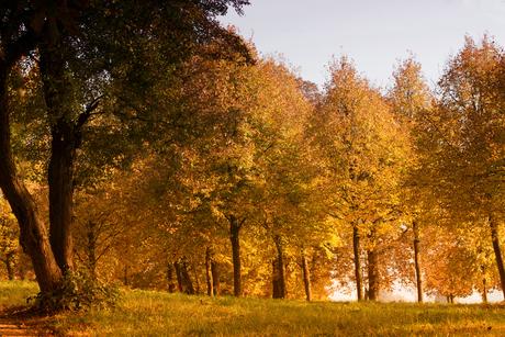 autumn colors 3161