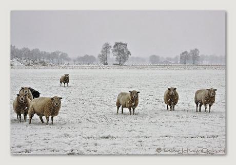 Het blijft winter .....
