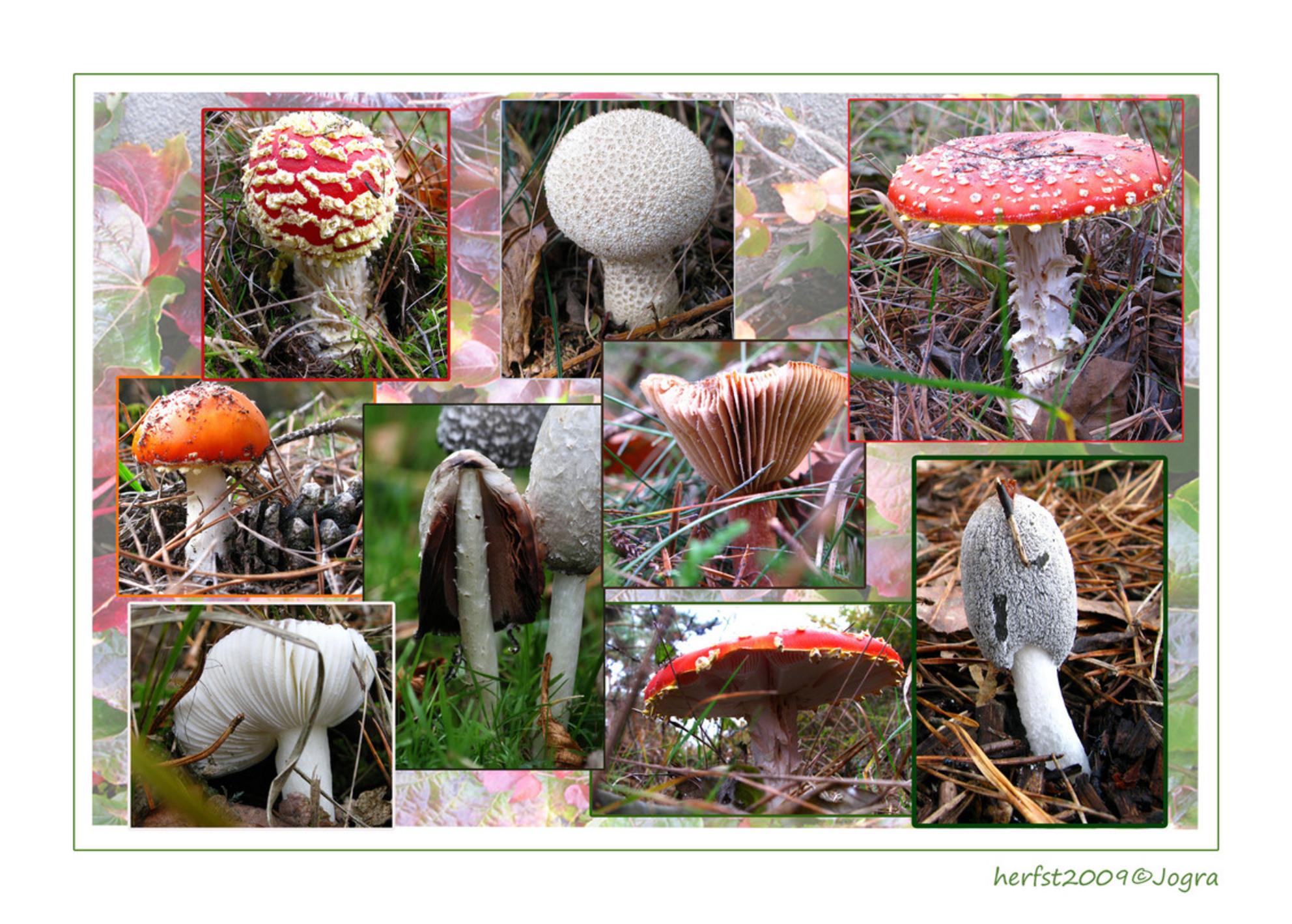 paddestoelcollage - - - foto door Lathyrus op 30-10-2009 - deze foto bevat: paddestoel, herfst, collage