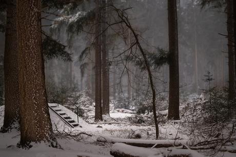 sneeuw februari 21 Darp