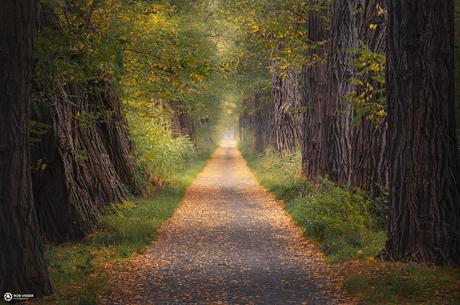 The wishing lane