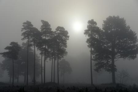 Mist in het Drents-Friese Wold - Mist en een waterige zon in de vroege ochtend in het Drents-Friese Wold in Drenthe. - foto door marcobos71 op 05-03-2021 - deze foto bevat: licht, winter, landschap, mist, heide, tegenlicht, zonsopkomst, bomen