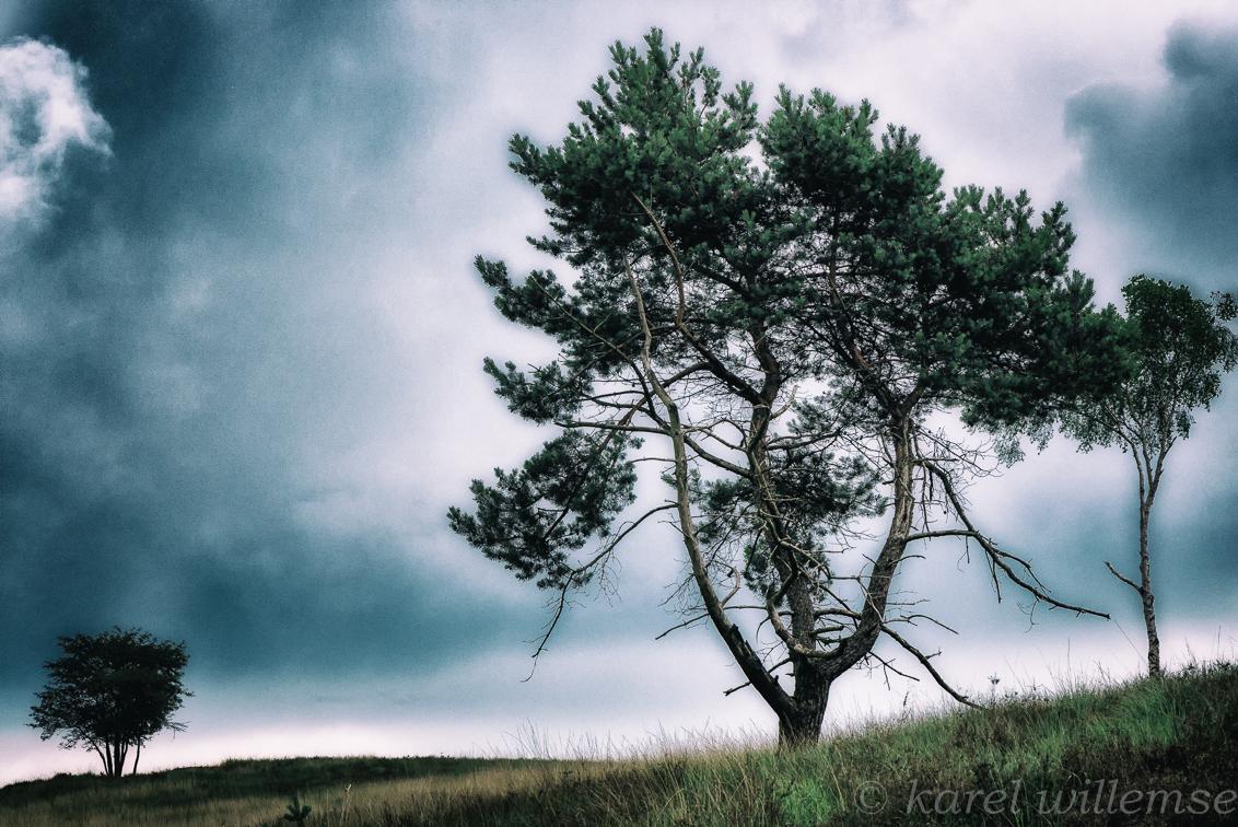spannend weer - vlak voor zware  regenbui op mookerheide - foto door karelwillemse op 07-07-2014 - deze foto bevat: natuur, landschap, heide, bomen