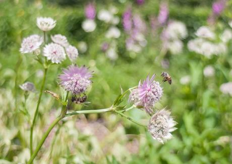 bijtjes en bloemetjes