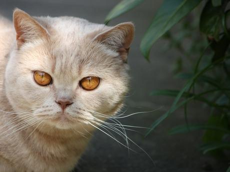 De zon in Donja's ogen