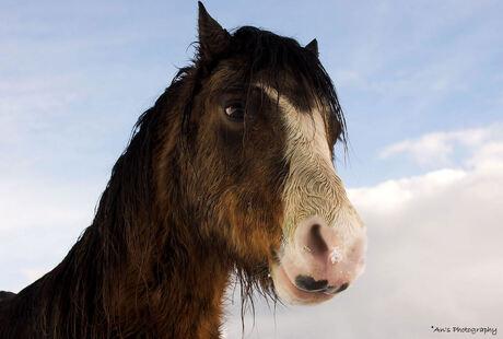 Ameland 4: een paardje