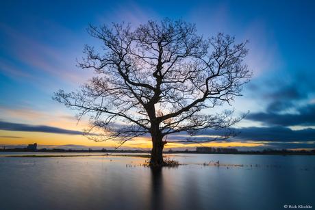 Dutch Lake Wanaka Tree II