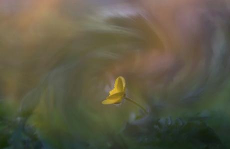 kleine gele bloem