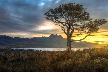 Eenzame Pijnboom aan schots meer