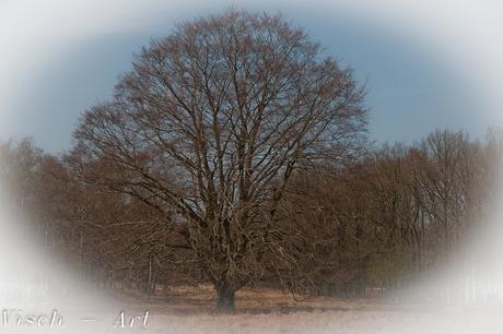 Aardhuis Majestueuze boom