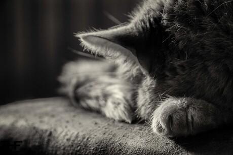 Gizmo slaapt