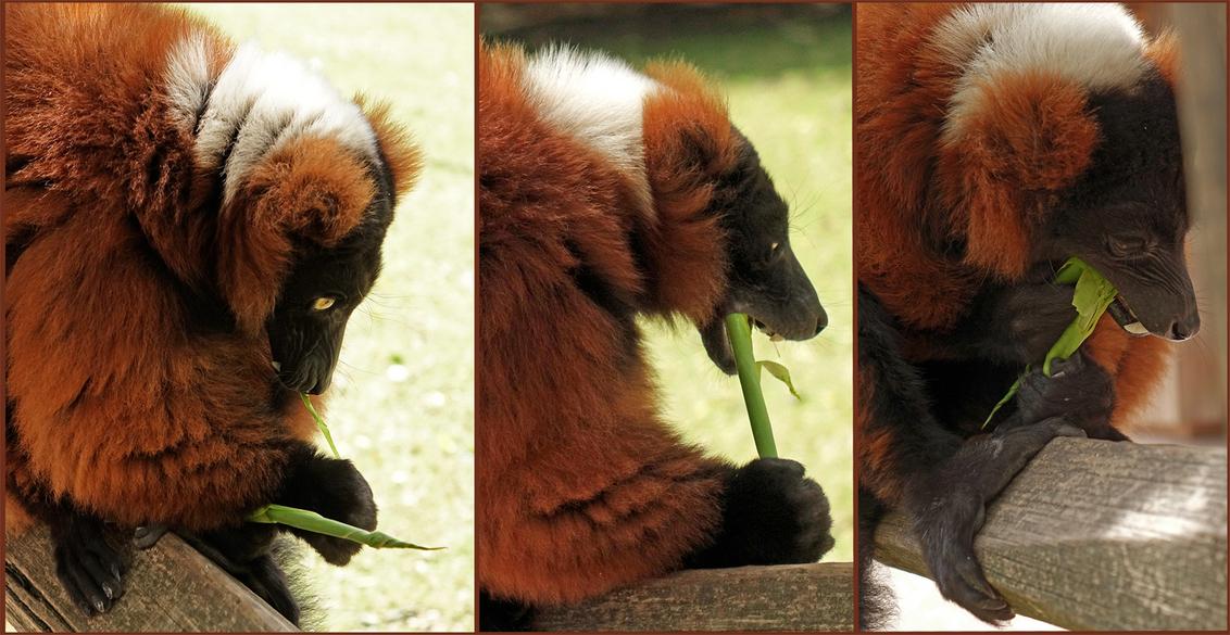 Gestolen goed..... - gedijdt wel degelijk:) groeten en een prettig weekend, Nel - foto door Nel Hoetmer op 05-07-2014 - deze foto bevat: dieren, artis, nel