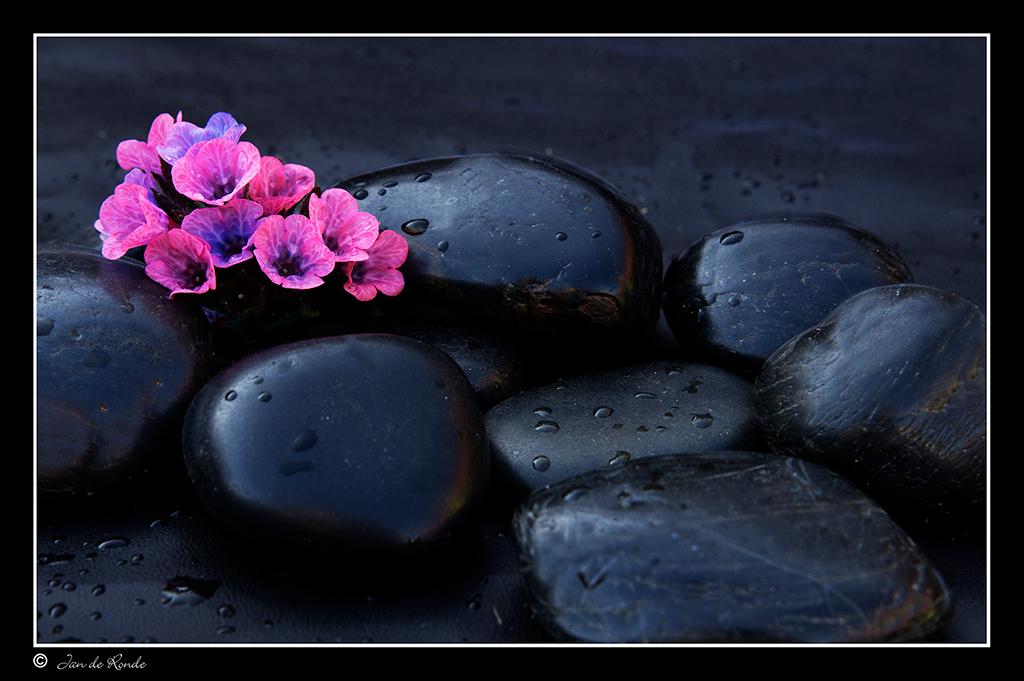 Flowers and Stones - Foto gemaakt voor een visitekaartje van een bedrijf Herbs For Well-Being Was leuk om te doen  Bedankt voor de reacties op me vorige foto - foto door rondejan op 03-04-2014