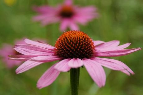 bloem achter bloem