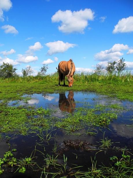 Reflectie van paard