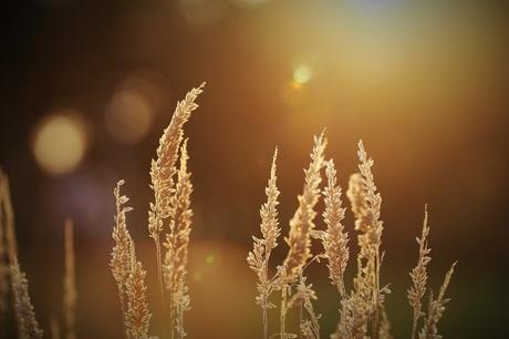Zon en natuur