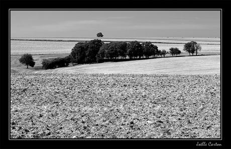 Bourgogne zwart-wit 1