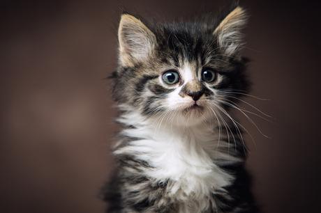 Lieve Kitten in de Studio