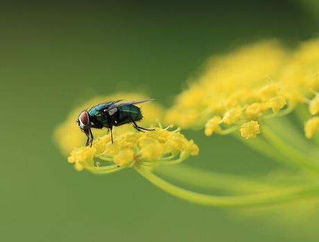 Between the yellow flower