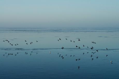 Vogels vliegend over het IJsselmeer