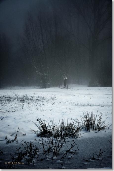 het donkere bos besneeuwd