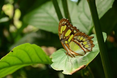 Een vlinder in de spotlight