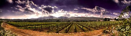 Valley of Wine