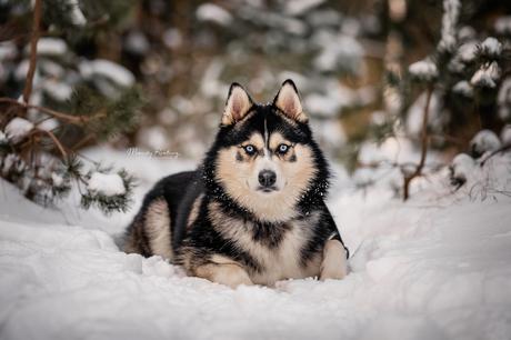 Jack in de sneeuw