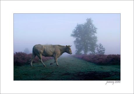 Joanny2-September morning-2