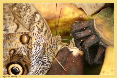 Vlindertuin Havelte