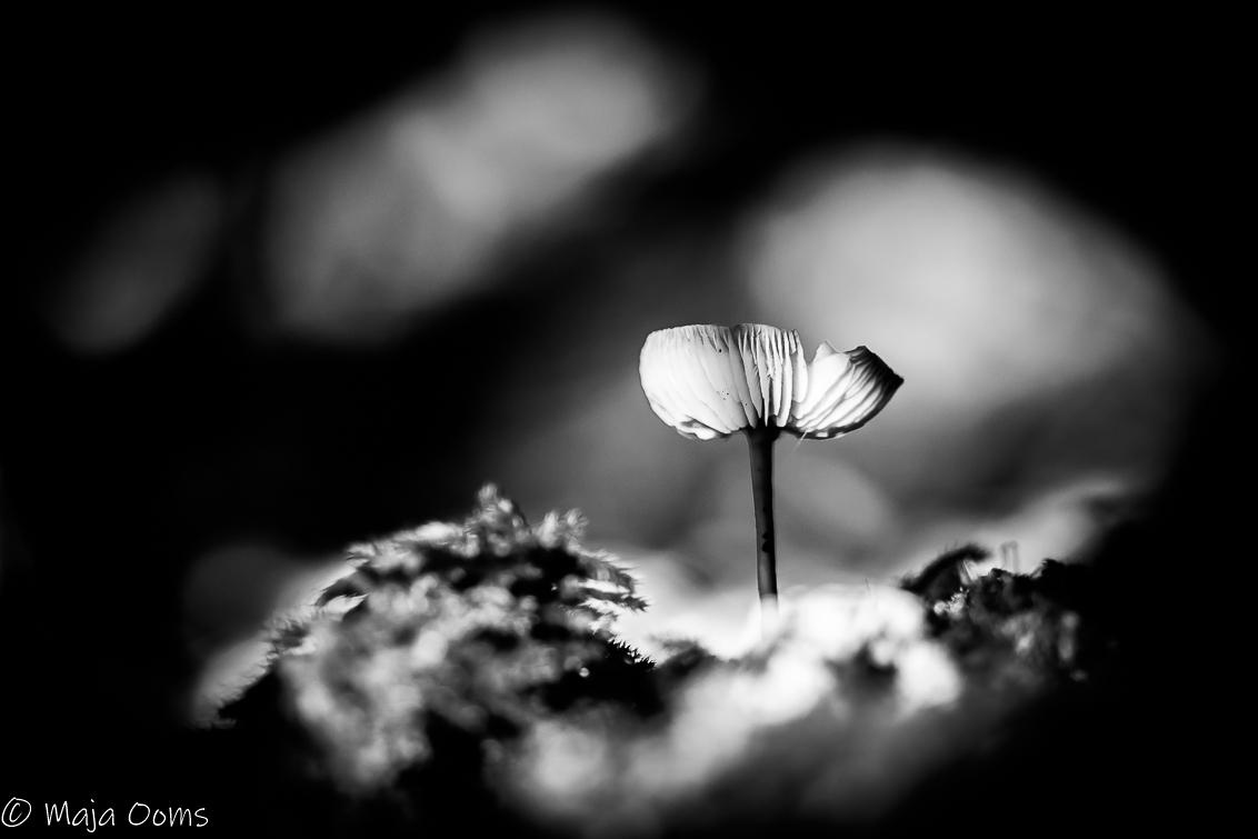 All alone... - Ik blijf het leuk vinden om foto's van paddenstoelen om te zetten naar zwart wit... - foto door mb83 op 03-10-2018 - deze foto bevat: natuur, bewerking, zwartwit, contrast, creatief, lightroom