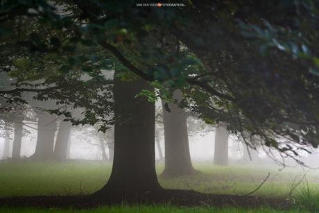 Wandering around in Fairyland