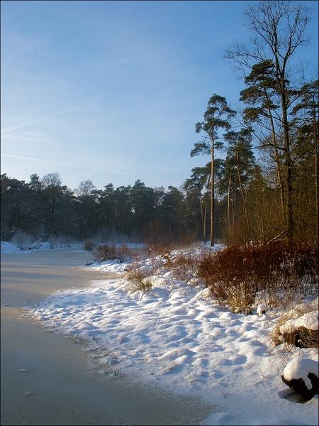 Sneeuw en ijs - Deze foto is met mijn compactcamera geschoten. Hierdoor is er iets te weinig ruimte boven de boom. Ik heb ook een versie met meer lucht maar dan staa - foto door juriheise op 02-01-2010 - deze foto bevat: sneeuw, winter, ijs, bos, oisterwijk, ven