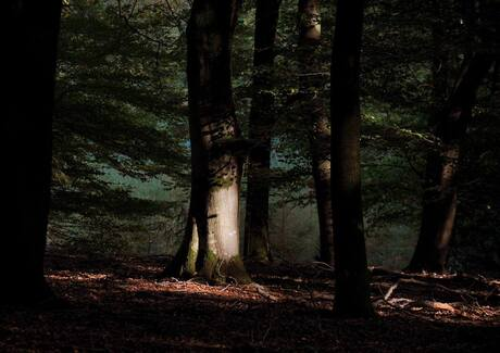 lichtval Speulderbos