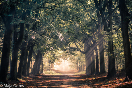 Morning forest...