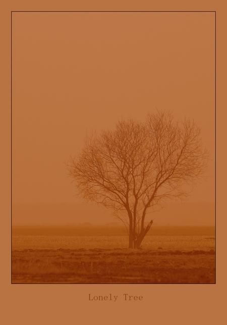 """Lonely Tree... - Slochteren   ThanX voor de reactie's op """"Morning Sun""""   Stan - foto door stanga op 04-03-2009 - deze foto bevat: stanga"""