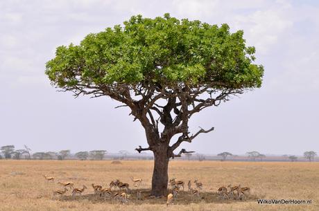 Groene boom zorgt voor schaduw