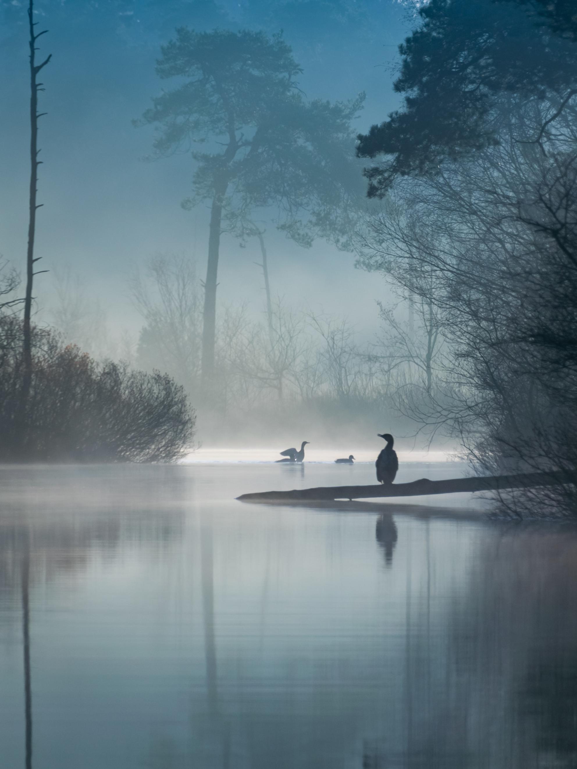 Robin Gooijers - It's like Magic - Oisterwijkse Vennen - Close-up van een Magisch scene die ik genomen heb bij de Oisterwijkse Vennen tijdens een mooie zonsopkomst. Alles klopte die ochtend, het licht, de k - foto door RobinGooijersFotografie op 25-02-2021 - deze foto bevat: blauw, zon, water, natuur, licht, vogel, spiegeling, landschap, mist, bos, zonsopkomst, bomen, meer, wandelen, vennen, zoomen