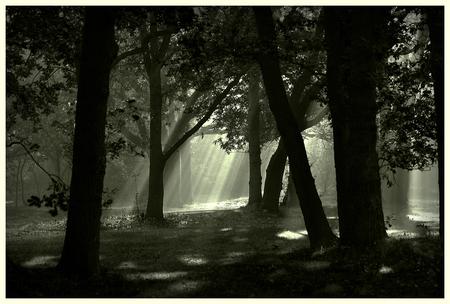 Mystical Forest - Zonneharpen door het dak van het bos. - foto door dtmn op 11-12-2010 - deze foto bevat: landschap, bos, mystical, zonneharpen
