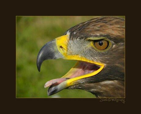 Roofvogelshow Terra Maris 4
