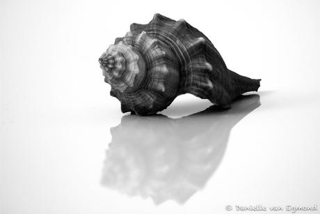 zwart-wit1